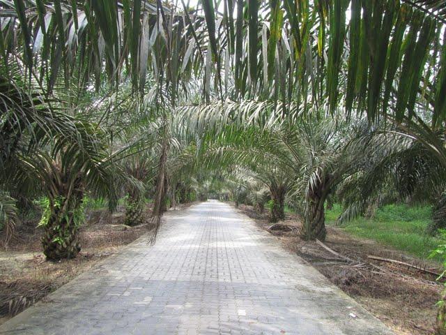 Vipassana course location, Gambang