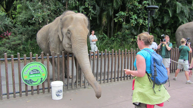 Heather feeding an Asian Elephant.