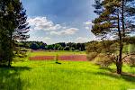 Wiesenland