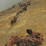 spalone korzenie drzew na szczycie krateru