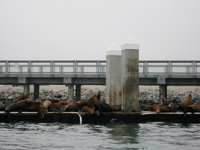 Pier of the sea lion