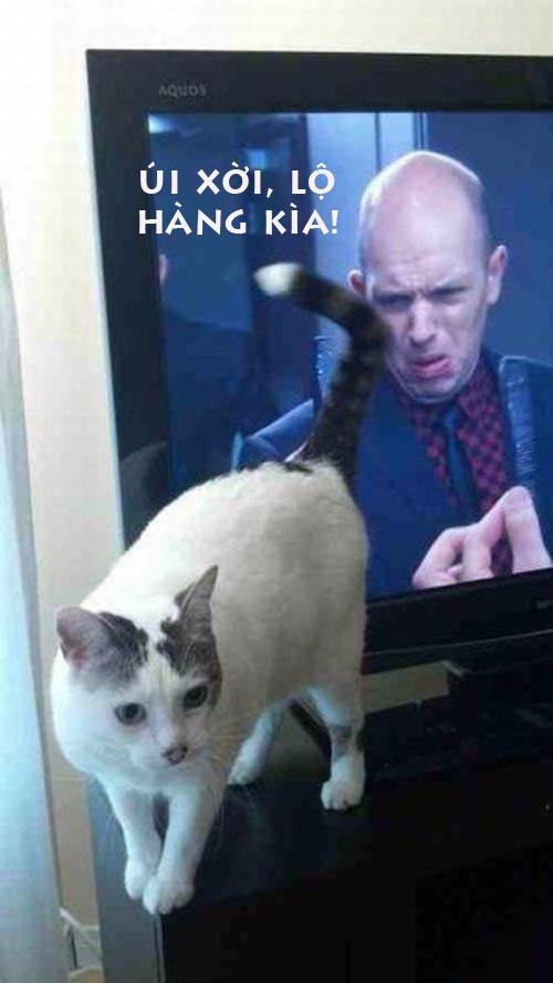 Ảnh chế Mèo lộ hàng