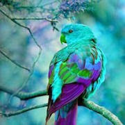 Видеть во сне мертвого попугая фото