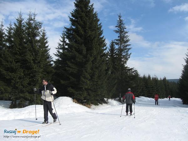 narty biegowe w jakuszycach