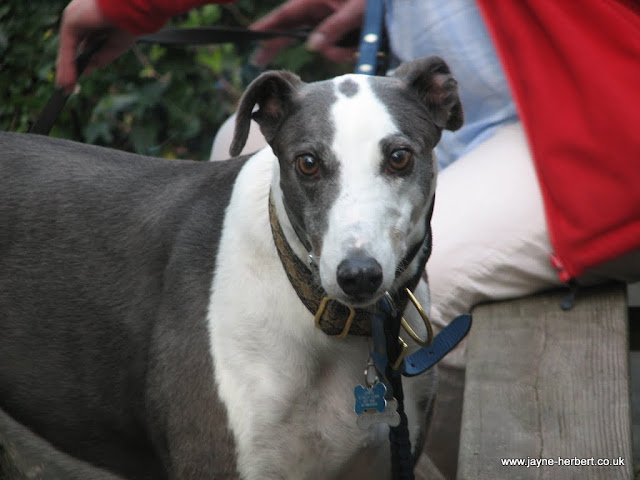Click here to see Jayne's RGT Chaseware photographs