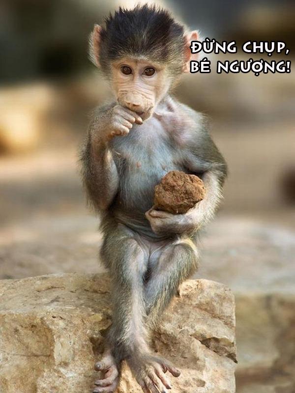 Ảnh vui, hài hước về họ hàng nhà Khỉ 3