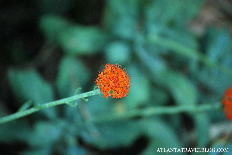 Кактусы Ботанического сада Атланты