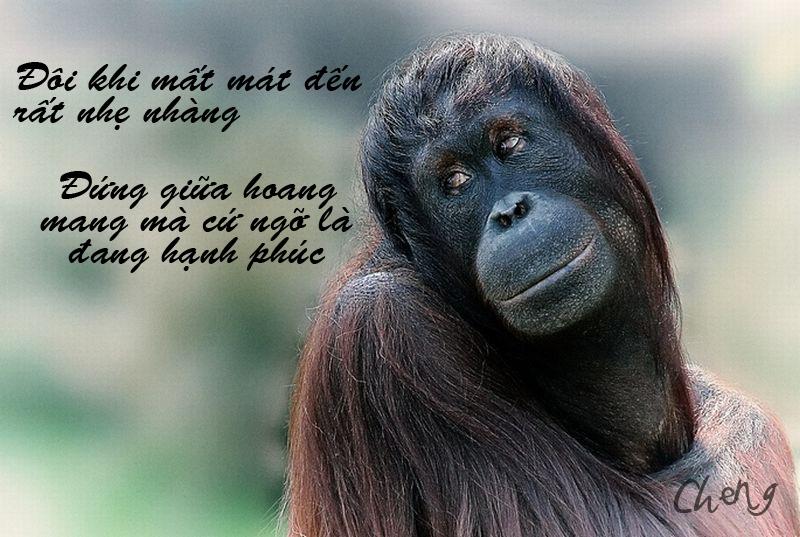 Ảnh chế nàng Khỉ
