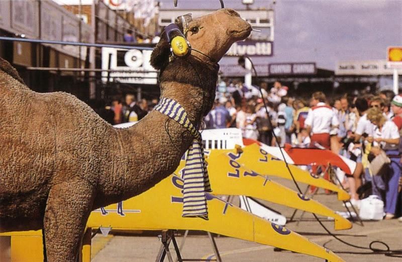 Lotus и верблюд табачного спонсора Camel с сигаретой во рту