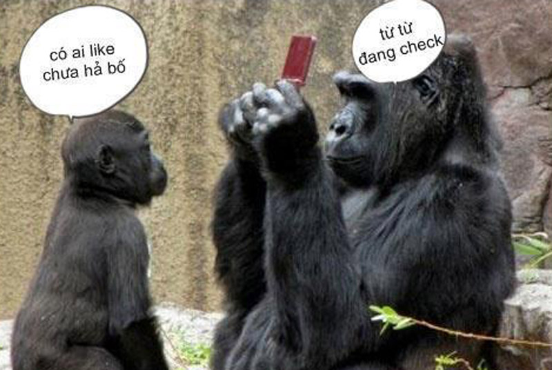 Khỉ check Like Facebook