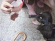 布朗尼一開始不敢接近哈比媽,直到哈比媽拿出親手做的豬肉乾後就西瓜偎大邊。