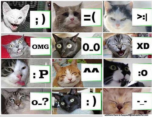 Ảnh mặt mèo với biểu tượng