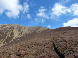 Heather path to Grasmoor