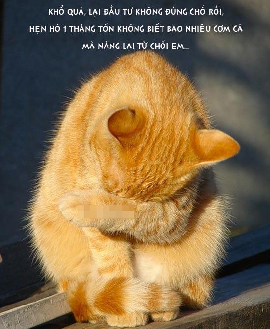 Ảnh vui mèo thất tình