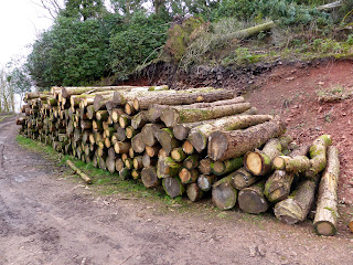 A big pile of logs on Fell Lane