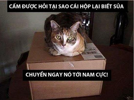 Ảnh chế Mèo nguy hiểm