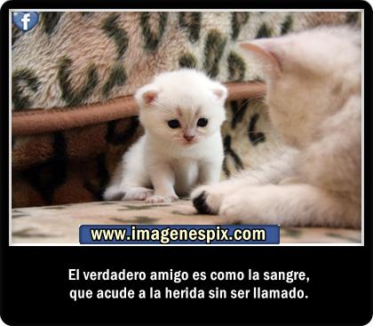 Dichos de Amistad en imágenes Frases de Motivacion - Imagenes Con Frases De Amistad Para Facebook