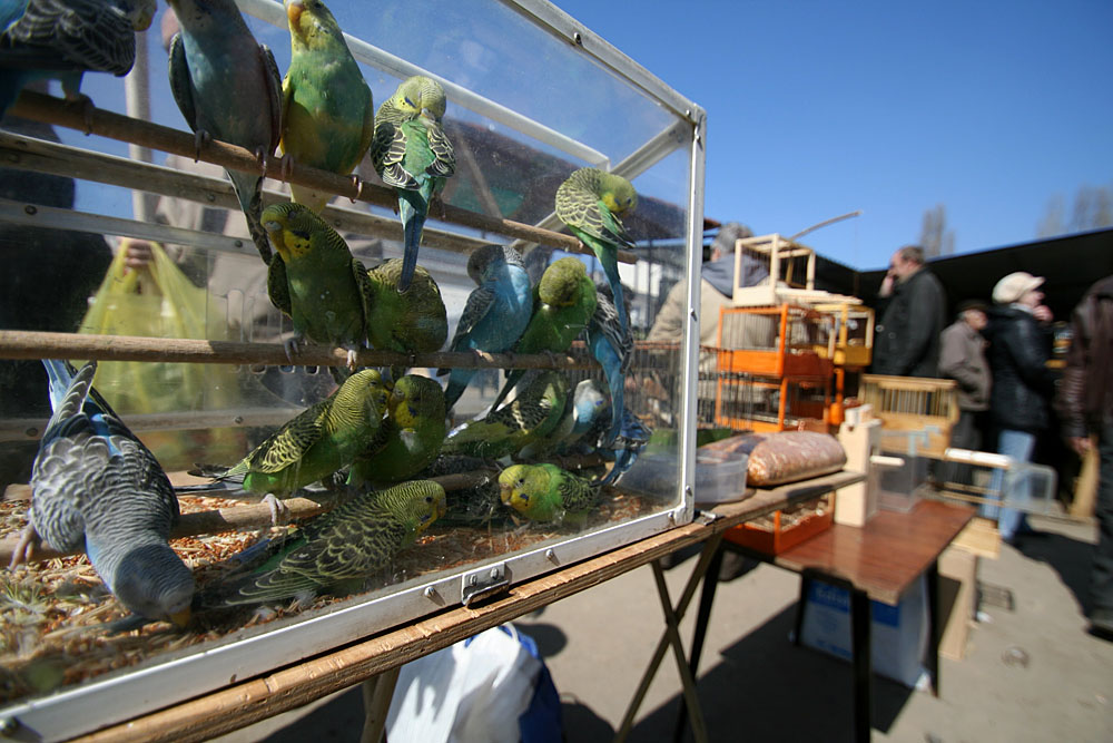 птичий рынок рыболовные