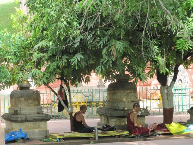 Bodhi Tree Bodh Gaya