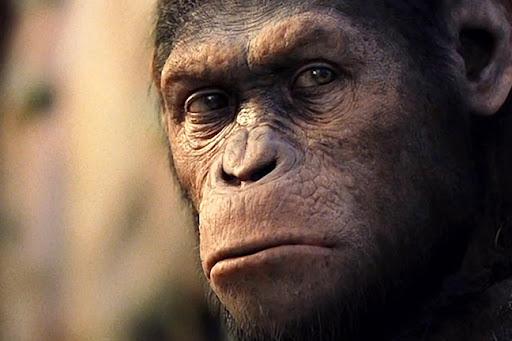 Apes Movie 2012 2012 Planet Apes Movie