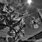 Montemagno d' Asti Pane al Pane 26 maggio 2013 - fotografia di Vittorio Ubertone
