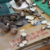 Taqua Nut Manufacturing - Montecristo, Ecuador