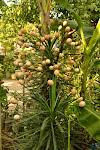 tradycyjne drzewo jajeczne ;)