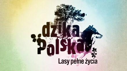 Dzika Polska. Lasy pe³ne ¿ycia (2007) PL.TVRip.XviD / PL