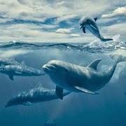 К чему снятся два дельфина фото
