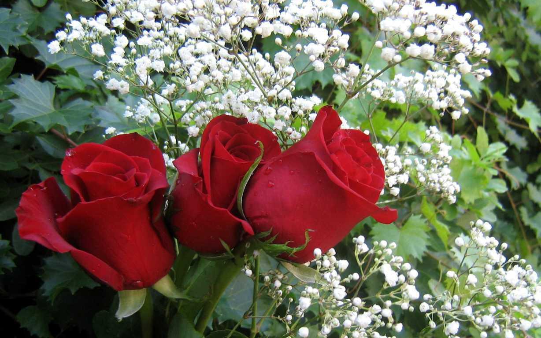 Ảnh bó hoa hồng nhung đẹp