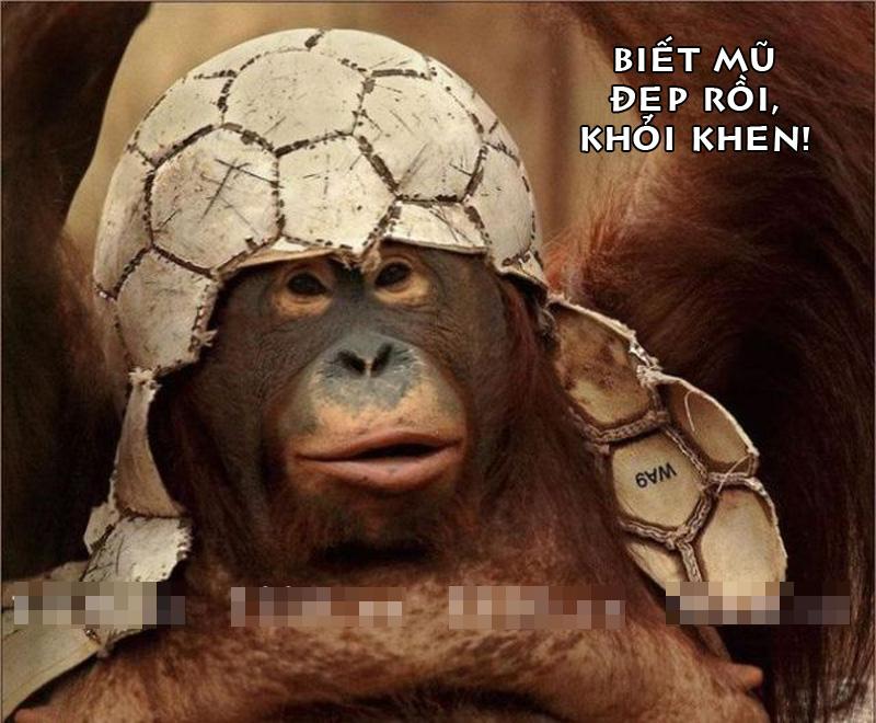 Ảnh chế họ hàng nhà khỉ thật bá đạo