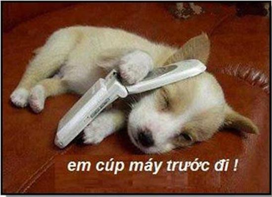 Ảnh cún con nghe điện thoại