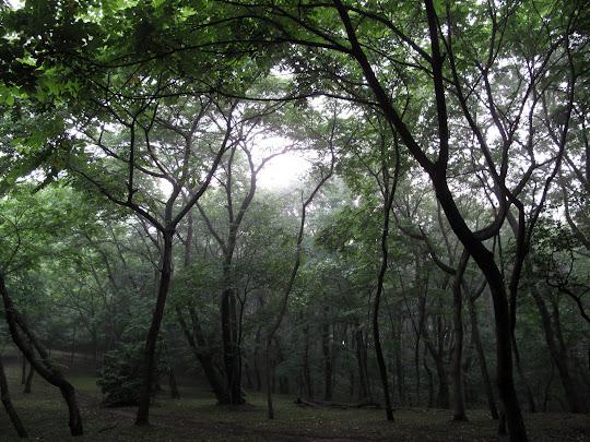 Hachikoku-yama Hills 八国山緑地