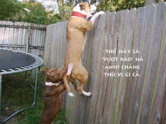 Ảnh 2 chú chó vui ngộ nghĩnh