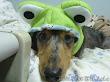 朋友送來的寵物用品,照慣例請招牌狗示範一次。