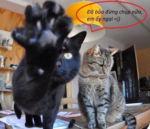 Ảnh chế mèo ngại chụp ảnh