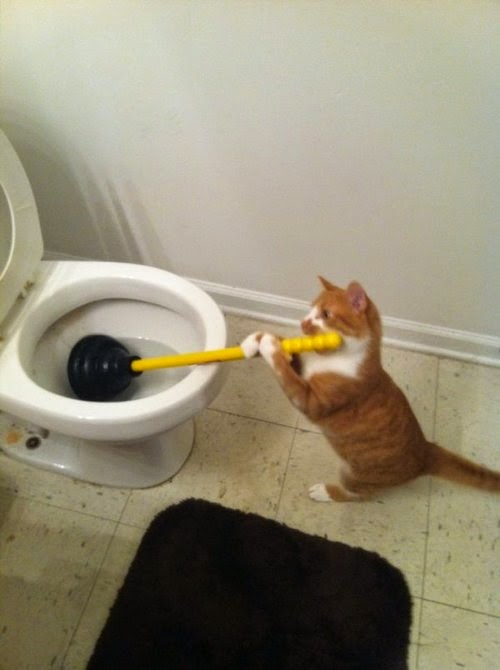 Hired a cut-rate plumber...
