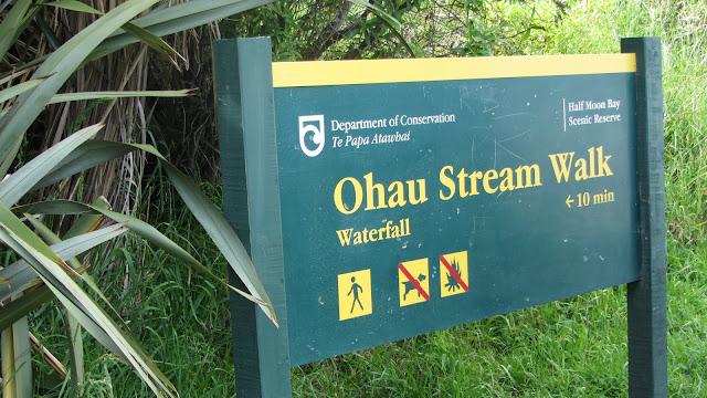 The Ohau Stream Walk - a large seal pup rookery.