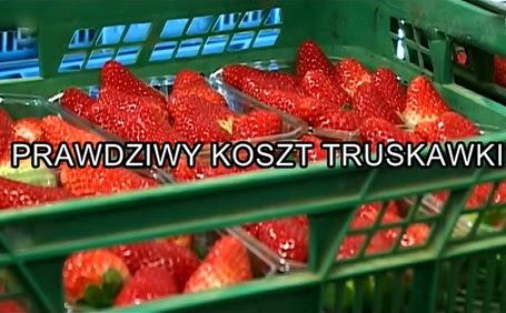 Prawdziwy koszt truskawki / La ran?on de la fraise (2009) PL.TVRip.XviD / Lektor PL