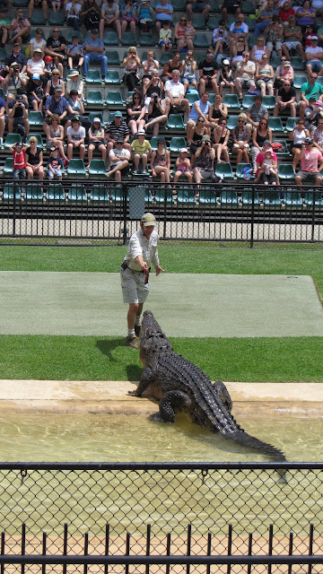 "Saltwater Crocodile feeding at Australia Zoo's ""Crocoseum."""