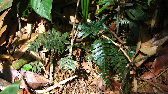 Ferns growing on the jungle floor.