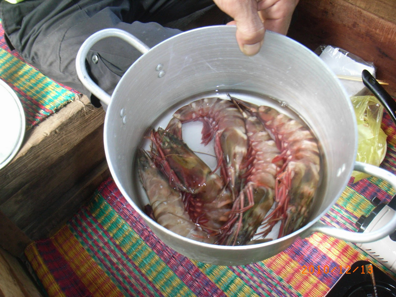 Freshly caught prawns