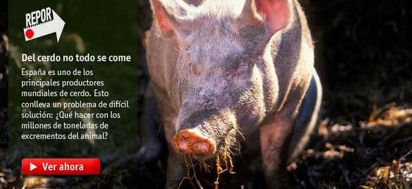 Del cerdo no todo se come [Repor][SATRip][Espa�ol][2013]
