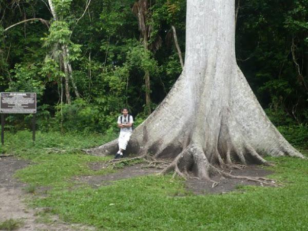 Paisaje en el camino hacia Tikal