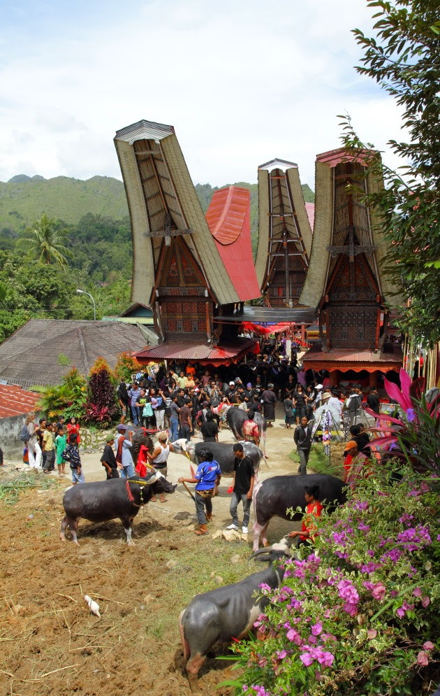 Funeral Scene at a Tana Toraja House