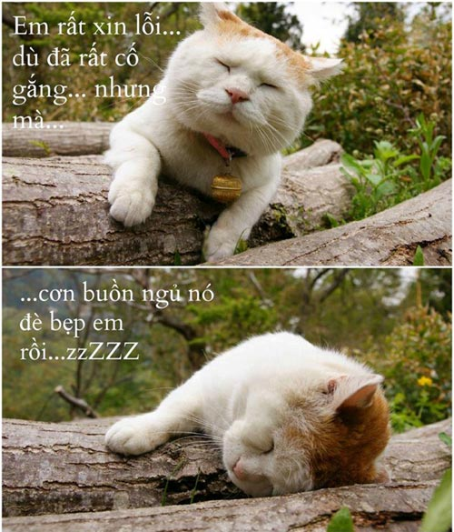 Ảnh chế Mèo buồn ngủ