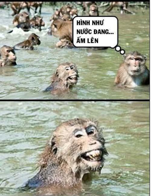 Ảnh vui về Khỉ