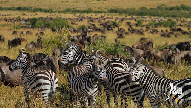 The great migration of Africa