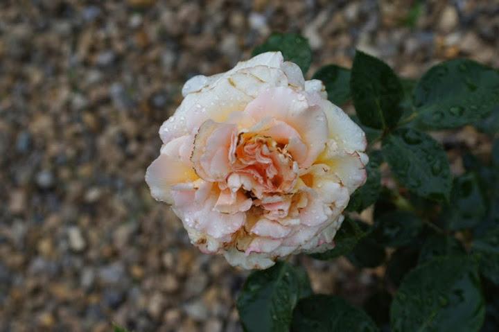 Цветок открывается днем