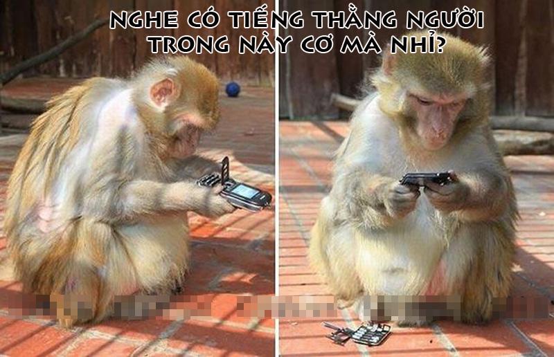 Ảnh vui Khỉ sử dụng Smartphone